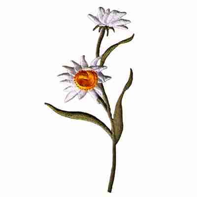 Pair of Daisies on Stem Iron On Floral Applique