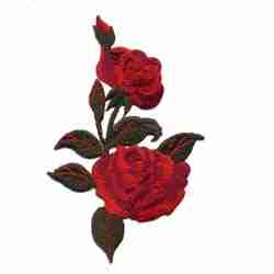 Red Roses on Vine