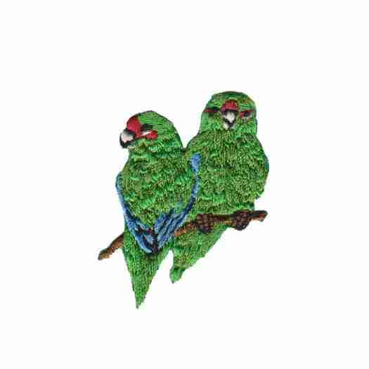 Green Cheeked Amazon Parrot Applique